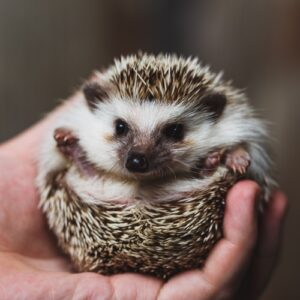 Great Pets for Small Homes