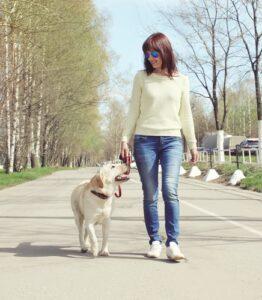 Is Your Neighborhood Dog Friendly?