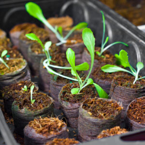 Planting a garden in your home